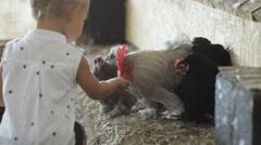 Cute little girl feeding chicken Stock Footage