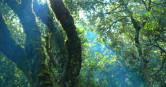 Beautiful rays of sun light in dense forest of Cameron Highlands in Malaysia Stock Footage