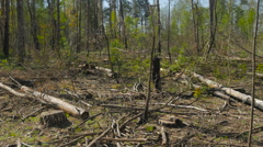 View of tree felling Stock Footage