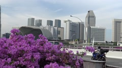 4k, View of traffic on highway behind Bougainvillea flowers in Singapore -Dan Stock Footage
