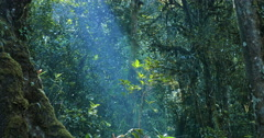 Sunlight ray shines through deep forest canopy at tranquil sunny day. Woodlan Stock Footage