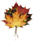 Boquet Fall Maple Leaves Stock Photos