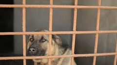 Shepherd dog barks in the cell. Dog in a cage. Dog shelter Stock Footage
