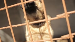 Shepherd pulls the nose out of the cell. Aviary with a dog - stock footage