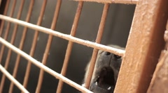 Big dog in a cage. Shepherd dog barks in the cell. Cynology. Canine Stock Footage