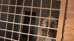 Large dog cage. A dog barks in the cell. Dog in a cage - stock footage