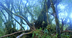 Mossy trees and fog moving among branches of magical fairyland misty forest Stock Footage