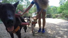 Female Volunteer at Animal Shelter with Injured Dogs in Wheelchair. 4K Stock Footage