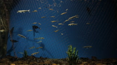 Many kinds of fish swim in beautifully decorated aquarium - stock footage