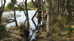 Australia Eurobodalla National Park swampy water Stock Footage