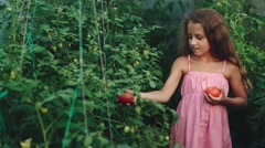 Curly Girl in a Pink Dress Picks Tomatoes Stock Footage