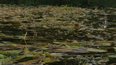 Overflowing river delta in the jungle during the rainy season. Stock Footage