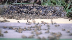 Bees in hive Stock Footage