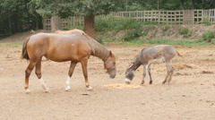 Horse to the stable yard. Stock Footage