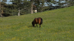 Brown Horse Grazing in a Field Stock Footage