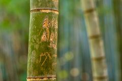 Bamboo forest, Kyoto Stock Photos