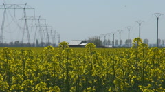 Ripe rape field in rural village house and electric pillar bio colza culture Stock Footage