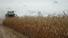 Combine harvester gathering maize corn Stock Footage