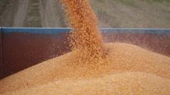 Combine harvester unloads maize corn into trailer Stock Footage