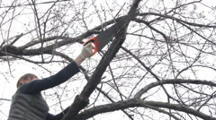 Woman cuts off the branches by hand saw Stock Footage