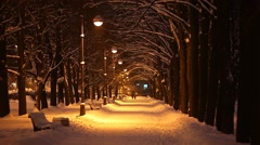 Nice park alley at winter night, illuminated by streetlights. Wayside trees Stock Footage