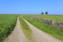 Track disappears into distance, grass, two trees and dry stone walls, typical Stock Photos