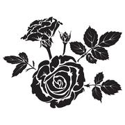 Silhouette rose branch with opened flowers and buds Stock Illustration