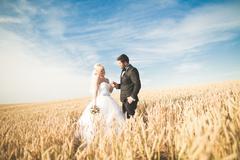 Emotional beautiful bride hugging newlywed groom at a field closeup Stock Photos