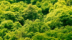 A dense forest on the hill in the bright summer light Stock Footage