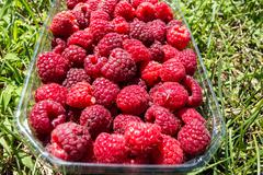 Close-up Raspberry Fruit in a Basket on the Lawn - stock photo