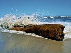 Waves splashing over driftwood on beach. Stock Photos