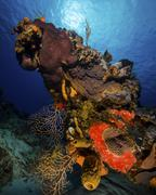 A colorful reef scene with sunburst at Cozumel, Mexico. - stock photo