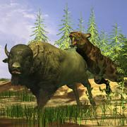 A Saber-Tooth cat pounces onto a frightened Buffalo. Stock Illustration