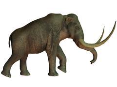 The Columbian mammoth, an extinct species of elephant. Stock Illustration