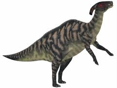 Parasaurolophus, a herbivorous dinosaur from the Cretaceous period. - stock illustration