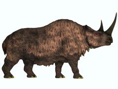 Woolly Rhinoceros, an extinct mammal from the Pleistocene Period. Stock Illustration