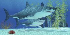 Two Megalodon sharks from the Cenozoic Era. Stock Illustration