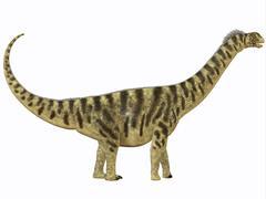 Camarasaurus was a sauropod dinosaur that lived during the Jurassic Age. Stock Illustration