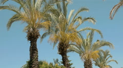 Palm trees are moving in the wind - stock footage