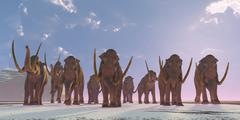 A herd of Columbian Mammoths migrate to a warmer climate. Stock Illustration