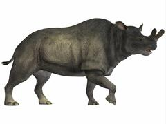 Brontotherium is a rhinocerous-like mammal. - stock illustration
