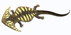 Diplocaulus amphibian from the prehistoric era. - stock illustration
