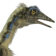 Archaeopteryx is a carnivorous bird that lived during the Jurassic period. Stock Illustration