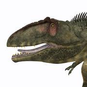 Giganotosaurus dinosaur head. Stock Illustration