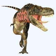 Tarbosaurus dinosaur roaring, front view. Piirros
