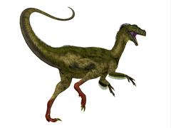 Ornitholestes dinosaur, white background. Stock Illustration