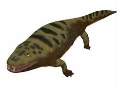 Mastodonsaurus amphibian on white background. - stock illustration