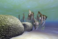 A group of angelfish swim near a rock full of coral incrustations. Stock Illustration