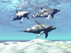 Three dolphins swimming over a sandy reef. - stock illustration