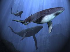 Two humpback whales and a shark swim among ancient city ruins. Piirros